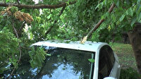 Kocaeli'de şiddetli fırtına ağaçları devirdi