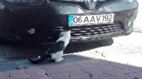 Kedinin serçe avı kamerada