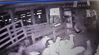 Arnavutköy'de kurbanlık hırsızları kamerada: 7 küçükbaş hayvanı dakikalar içinde çaldılar