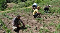 Terörden temizlenen Hakkari'de 25 yıl sonra yeniden tarım