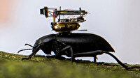 Böceklere yerleştirilecek küçük kamera yaptılar