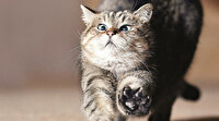 Dünyada en fazla fotoğrafı çekilmiş kedi unvanına sahip olan Ayasofya'nın sevimli bekçisi Gli'nin birbirinden sevimli halleri