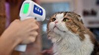 İngiltere'de ilk defa evcil hayvanda koronavirüs tespit edildi