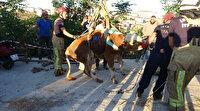 Üsküdar'da hayvan pazarından kaçan kurbanlık boğa ortalığı birbirine kattı