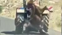 Kurbanlık ineği traktörün arkasına asarak götüren vicdansız adam cezasız kalmadı