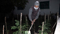 90 yaşında koronavirüsü yendi: İlk işi bahçesine gidip ekip biçmek oldu