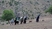 Berivan'ların zorlu yolculuğu: Süt sağmak için her gün kilometrelerce yol yürüyorlar