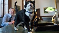 Diplomat kedi Palmerston emekli oldu: Kendime vakit ayırmak istiyorum