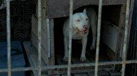 Yasak olmasına rağmen tehlikeli cins köpekleri internetten pazarlıyorlar