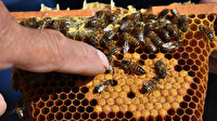 Kraliçe arı üretip yılda 5 bin adet yurt geneline satıyor: Tanesi 50 TL