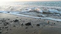 Yuva sayısında rekor kırılan caretta carettalar, koruyucuları eşliğinde denizle buluşuyor
