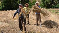 Huzur ortamı sağlandı terk ettikleri topraklara geri döndüler: 25 yıl sonra yeniden tarıma başladılar