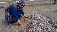 Sel felaketi 1 ton fındığı sularla götürdü