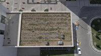Yerli otomobilin merkez üssünde şaşırtan görüntü: Çatıda yetiştiriyor!