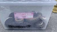 İstanbul Başakşehir'de beslenmesi yasak olan 6 piton yılanına el konuldu