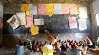 Bir zamanlar öğrecilerle doluydu şimdi tavuklar yaşıyor: Okul kümese döndü