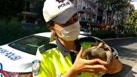 Trafik ekipleri bu kez kaplumbağanın imdadına koştu