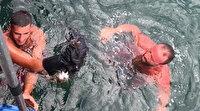 Bursa'da denize düşen kediyi cankurtaran çıkardı