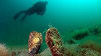 Bu da denizlerdeki koronavirüs: Hızla yaşamlarını kaybediyorlar!