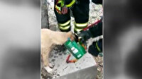 Denizli'de itfaiye ekipleri, kafası konserve kutusuna sıkışan köpeği kurtardı