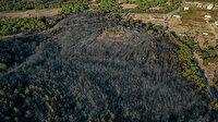 Balıkesir'deki orman yangınında zarar gören 80 hektarlık alan havadan görüntülendi
