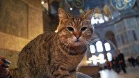 Ayasofya'nın kedisi Gli'den kötü haber: Ayrı bir odada bakılacak