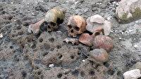 Çanakkale'de korkutan görüntü: Gölette bulundu