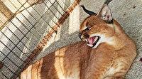 Sakarya'da kaçak mini hayvanat bahçesine baskın