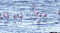 İzmit Körfezi'nde flamingolar renkli görüntüler oluşturdu