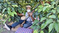Pazarda tanesi 10 liradan satılan avokado Antalya'da hırsızların hedefi oldu