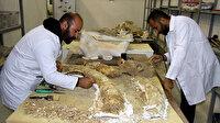 Kayseri'de çıkan fosiller bilim tarihine ışık tutacak