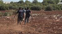Kesilen zeytin ağaçları için akrabalar birbirine girdi: Jandarma müdahale etti