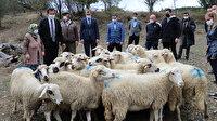 Kurt saldırısında koyunları telef olan aileye 21 küçükbaş hayvan hediye edildi