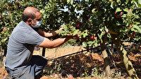 Kariyerini bıraktı, İtalya'da elma üretimini öğrendi: Meğer bazı şeyleri yanlış yapmışız