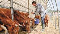 Hayvancılık yatırımına yüzde 100 destek