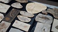 Adnan Oktar'ın örgüt evlerinden milyon dolarlık fosiller çıktı: Yaklaşık 150 milyon yıllık fosiller ele geçirildi