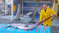 Marmara'da 3 metrelik dev kılıç balığı yakaladılar: Kilosu 100 liradan satılacak