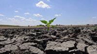 Trakya'da son 91 yılın en kurak dönemi: Üreticinin ekim dönemini değiştirdi