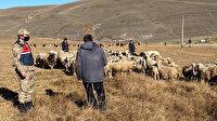 Ardahan'da kayıp koyun sürüsü, dronla bulundu