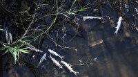 Antalya'daki korkutan balık ölümlerinde kimyasal madde iddiası