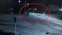 Köpeklerin saldırısına uğrayan yaşlı adam ölümden döndü