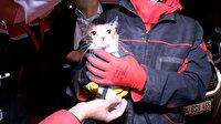 Yılmaz Erbek Apartmanı'nın enkazından arama köpeğinin bulduğu kedi, kurtarıldı: Kediye 'Umut' ismi verildi