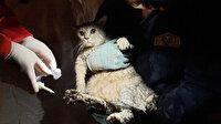 Emrah Apartmanı'ndan 32 saat sonra kurtarılan ilk canlı bir kedi oldu