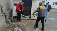 Pitbullardan tavuk katliamı: Tanesi 300 lira olan 53 tavuğu parçaladılar
