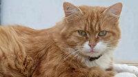 Fransa'da kedi alarmı: 8 yıl sonra bulunmuştu, yine kayıplara karıştı