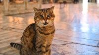"""Vali Yerlikaya'dan ölen """"Ayasofya Camii'nin kedisi Gli"""" ile ilgili paylaşım: Seni hiç unutmayacağız"""