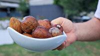 Üreticiler avokado talebine yetişemiyor: Çöplerden çekirdek toplamaya başladılar