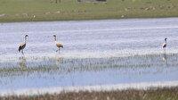 Eski günlerine dönen Kuyucuk Gölü 110 kuş türünü ağırladı