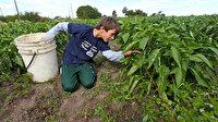 Bakanlık açıkladı: 12 bin çocuk işçiye ulaşılacak