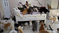 Evinde 480 kedi ve 12 köpekle yaşıyor: İnsanlardan daha iyi iletişim kuruyorum